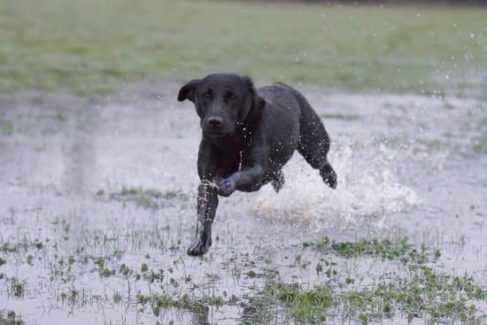 Assurez-vous-que-votre-chien-soit-dans-la-capacite-physique-de-faire-une-excursion