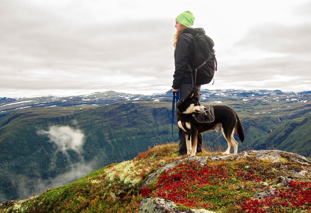 conseils-pour-faire-une-excursion-avec-votre-chien